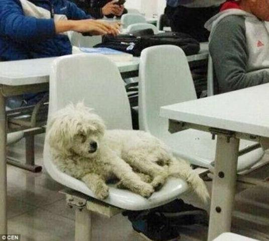 Casper mentre ascolta una lezione