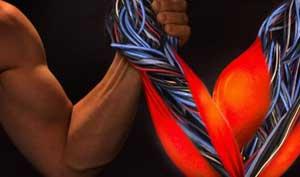 Fibre muscolari in provetta