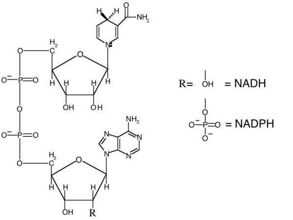 Struttura di Nicotinamide adenin dinucleotide o Nad