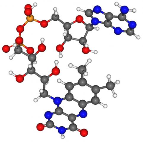 Struttura di Nicotinamide adenin dinucleotide o Nad2