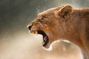 african safari 3