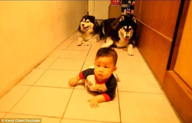 cani insegnano