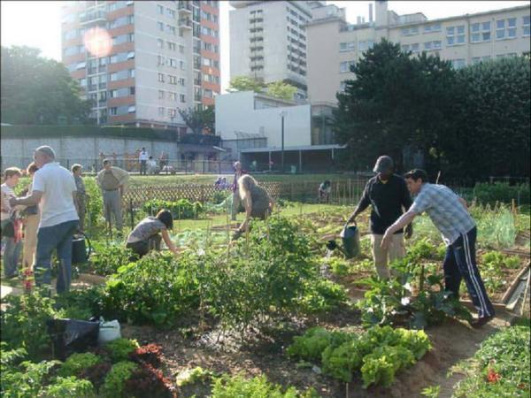 fuorilegge le piccole coltivazioni