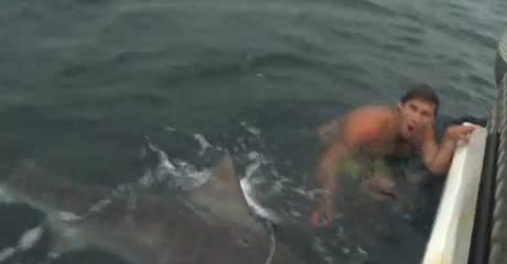 attacco dello squalo