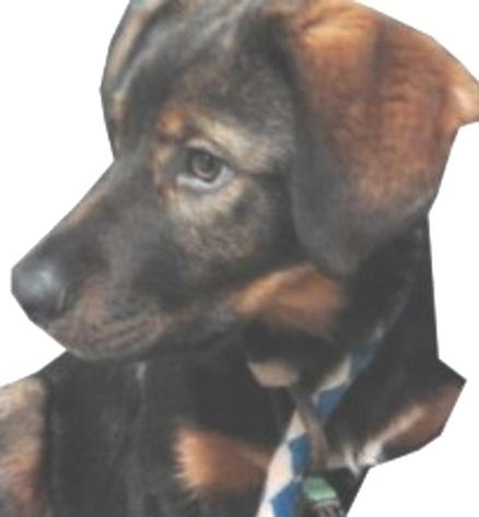 La foto del cucciolo, chiamare il numero 3397331962, se interessati