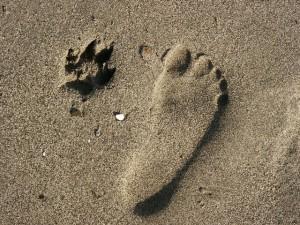 Cani - zampe - impronte