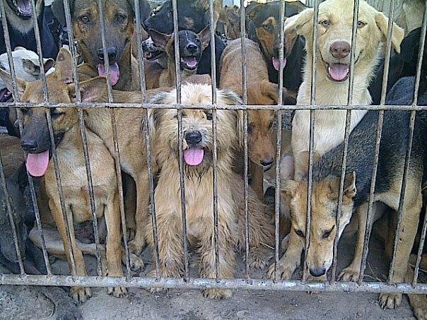 rapimenti di cani