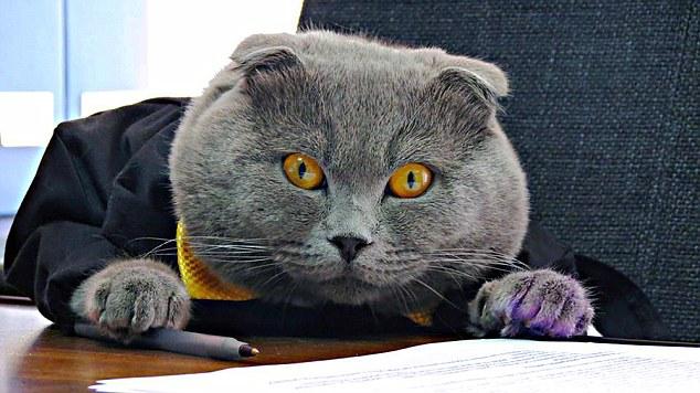 Bossy, il gatto direttore della comunicazione della Catbox