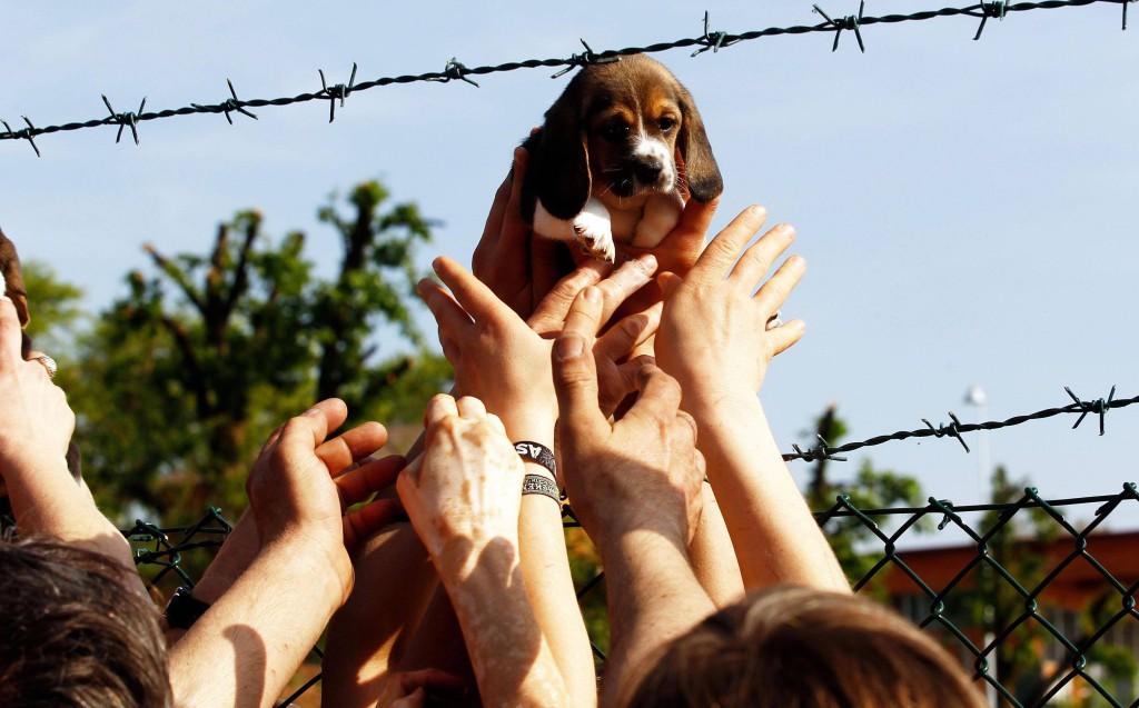Animalisti liberano cani da Green Hill