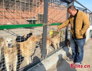 Uomo investe i suoi risparmi per un rifugio per cani