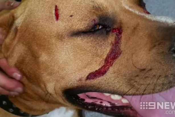 Cane aggredito durante la rapina