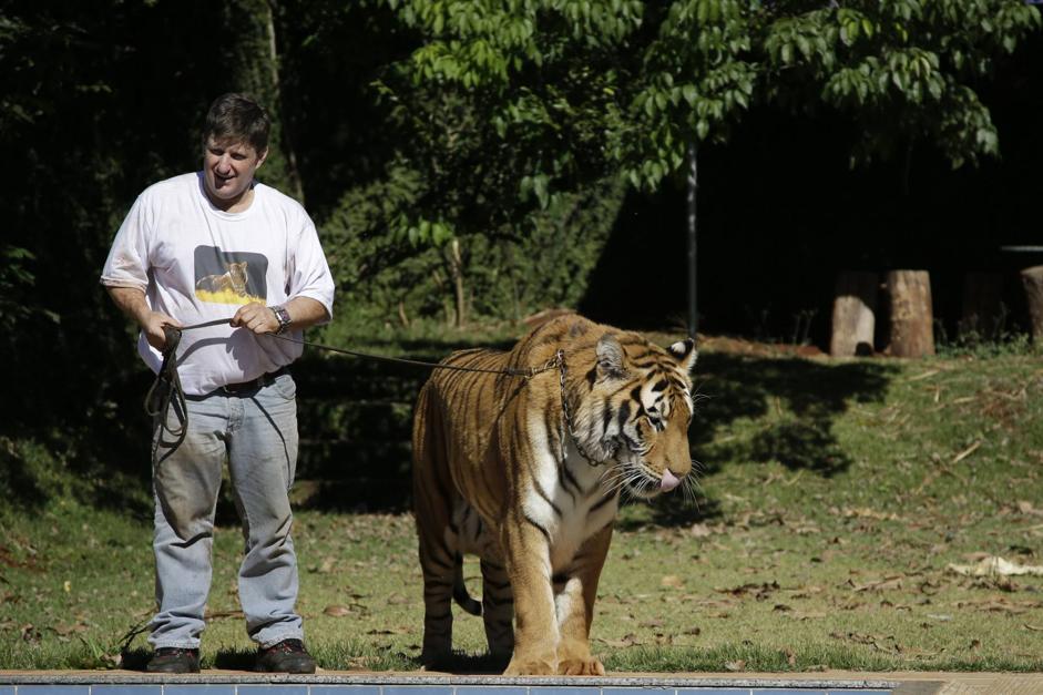 Mosca, tigre al guinzaglio