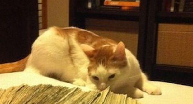 Vito, il primo gatto bionico d'Italia