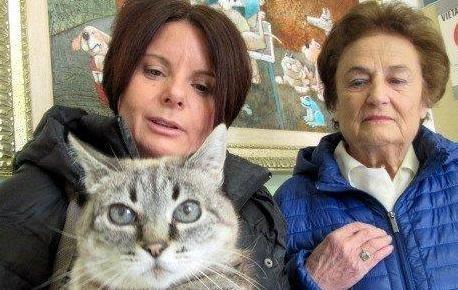Molly, la seconda gatta più vecchia del mondo