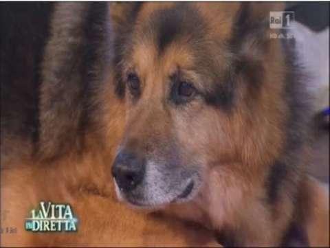 Cane ritorna dal padrone dopo 3 anni