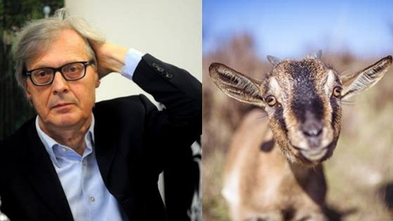 Sgarbi e le capre