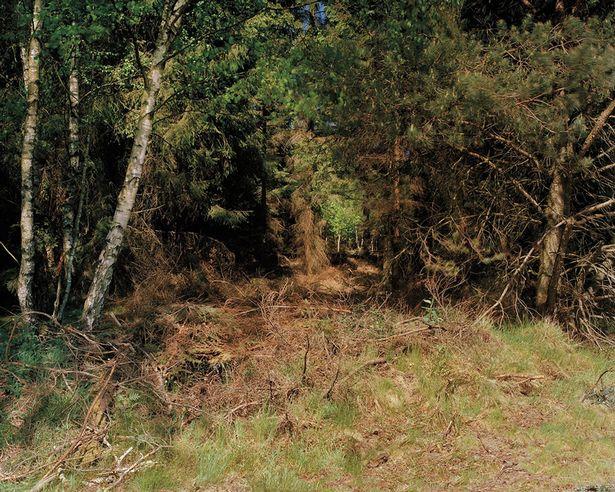 Cecchino nascosto tra gli alberi