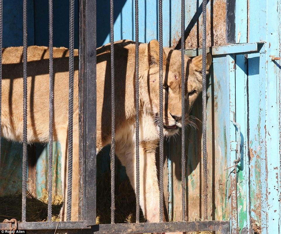 Lo zoo armeno che strazia il cuore
