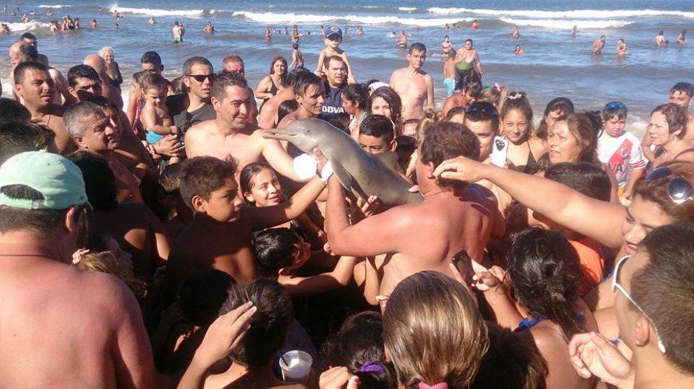 Delfino muore sulla spiaggia: tolto dall'acqua per scattare selfie