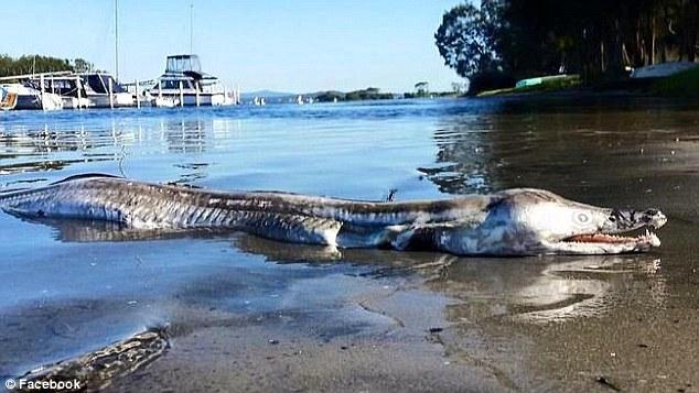 Strano animale fotografato in Australia