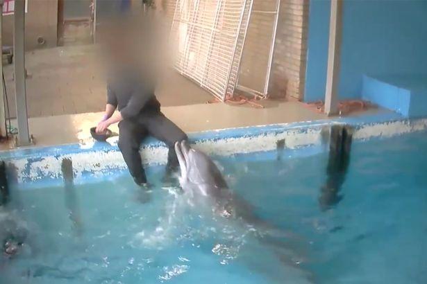 Atti sessuali con delfino
