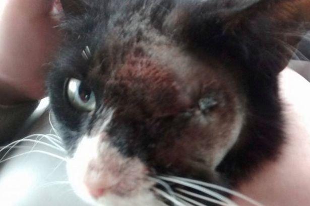 Oreo, il gatto torturato dai teppisti