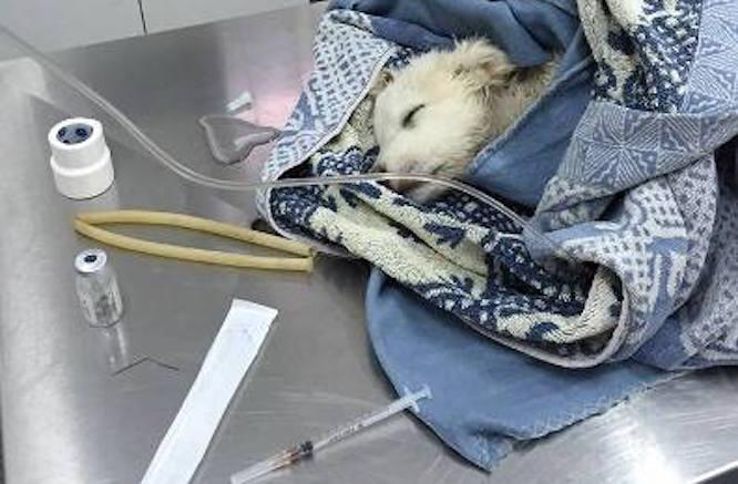 Cucciolo trovato vivo in un sacco assieme ai fratelli morti