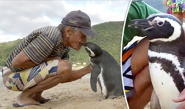 Pinguino va a trovare l'uomo che l'ha salvato ogni anno