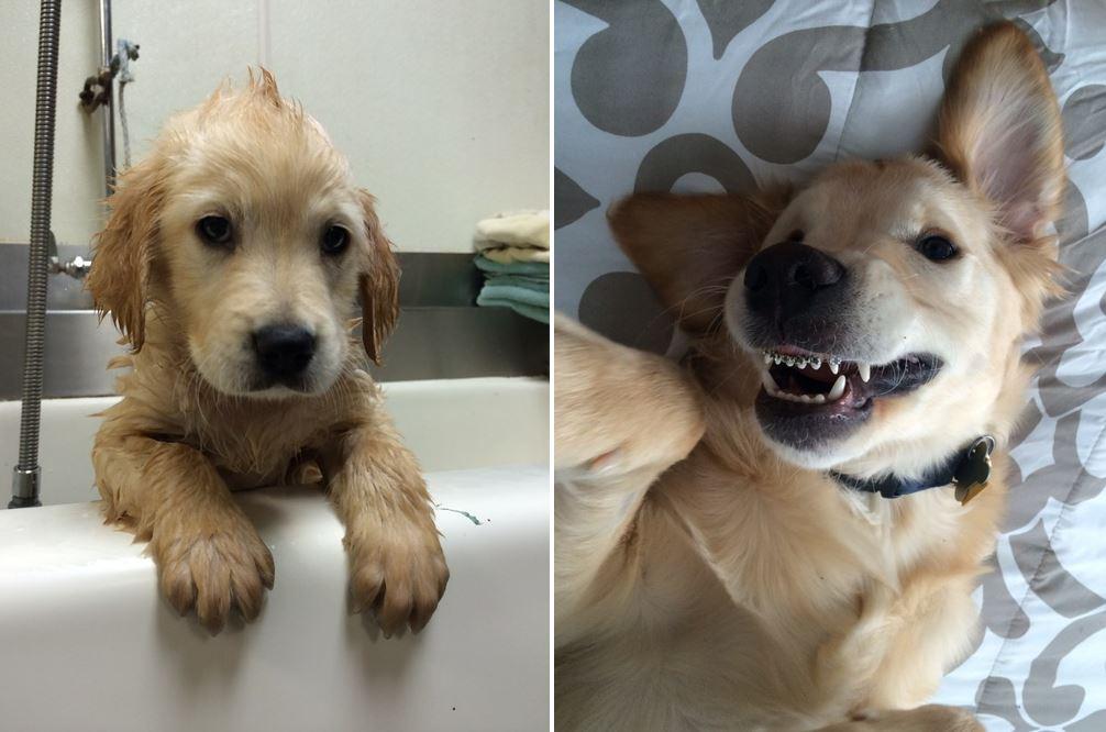 Wesley, il primo cane con l'apparecchio ai denti