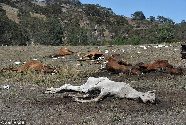 Cavalli morti di fame