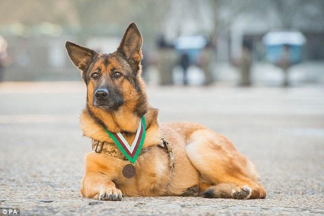 Lucca, la cagnolina eroe dei Marines