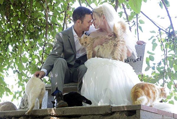 Si sposano di fronte a 1000 gatti