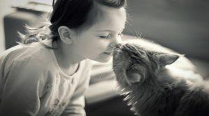 Gatti (10)