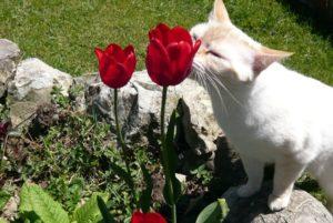Gatti (4)