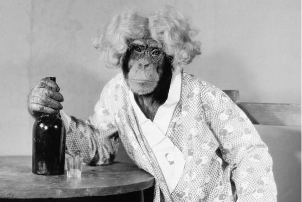 I primati anziani sono introversi come gli umani, ecco lo studio