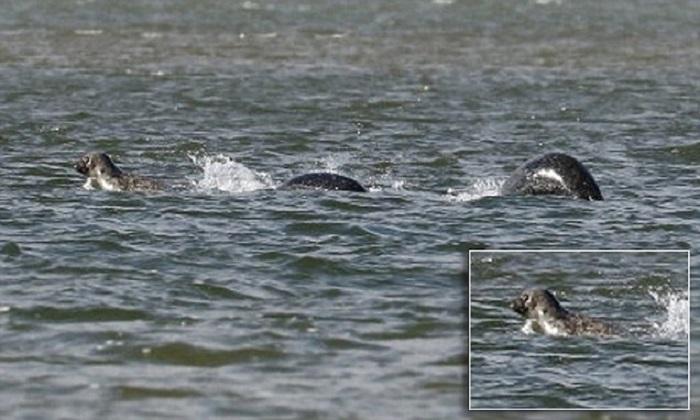 Nessie, ecco la foto del mostro di Loch Ness