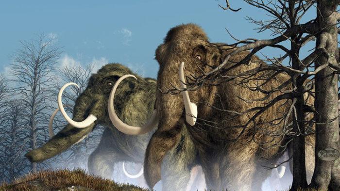 I mammut saranno riportati in vita