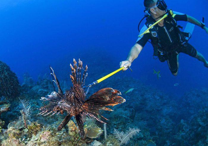 Il pesce scorpione è pericoloso per l'uomo e per il nostro mare