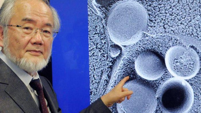 Ohsumi Yoshinori vince il Nobel per lo studio sull'autofagia