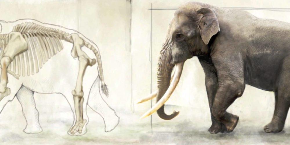 Trovati resti di Elephas Antiquus