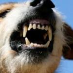 Allevatore uccide il suo cane