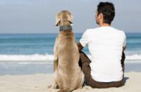 Cani e padroni