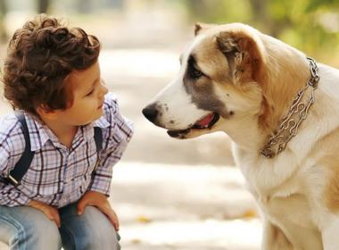 Paderno, cane aggredisce bimbo