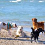 Rimini, cani al mare