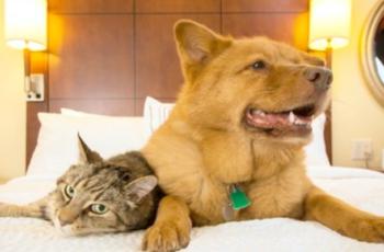 Cani e Gatti, strutture pet friendly