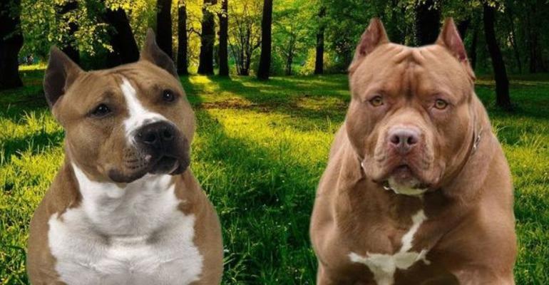 Grosseto, 28enne aggredito dai suoi cani