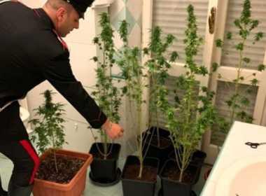 Roma, serra di marijuana in bagno, 19enne arrestato