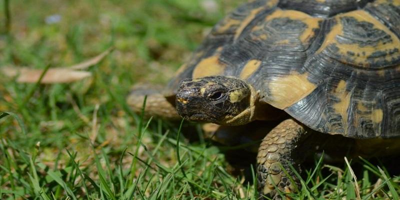 Filippine: 1500 tartarughe nascoste in valigie.