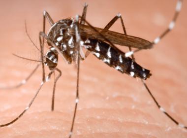 Troppo caldo: le zanzare potrebbero comparire prima.