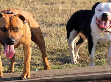 Brugnera, anziano sbranato da due cani